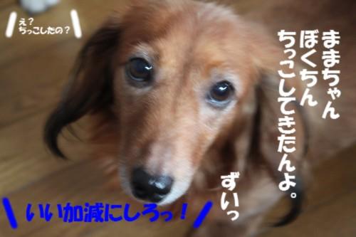 IMG_0429.jpg