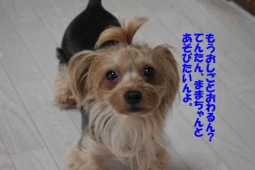 IMG_0467.jpg