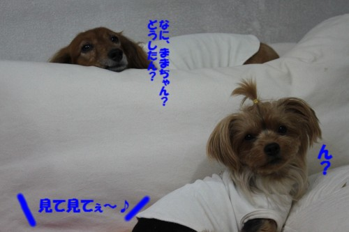 IMG_0683_201309180940561cc.jpg