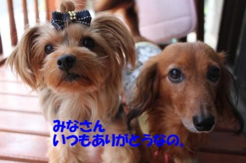 IMG_1018_201310041443379cb.jpg