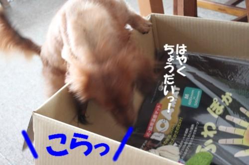 IMG_1107_201310101404103c6.jpg