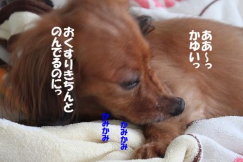 IMG_1123.jpg