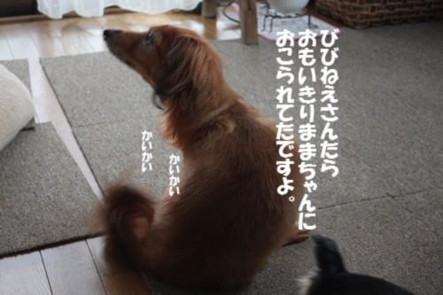 IMG_1313_201310191455501c8.jpg