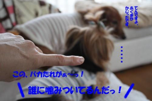 IMG_1358_20131022100030fb7.jpg