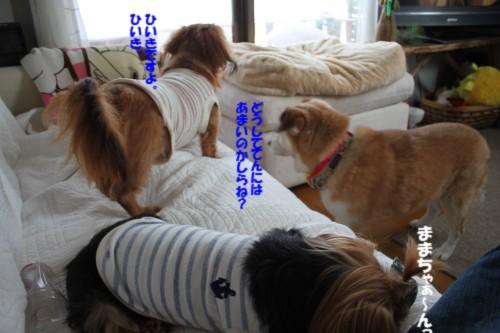 IMG_1360_2013102210003407d.jpg