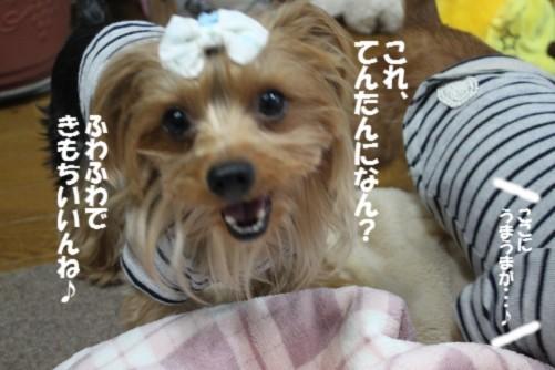 IMG_1512_20131101105504527.jpg