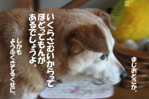 IMG_1830_20131118134410d73.jpg