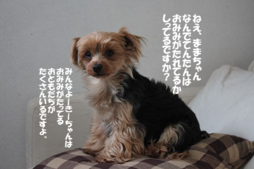 IMG_6466_20130404203242.jpg
