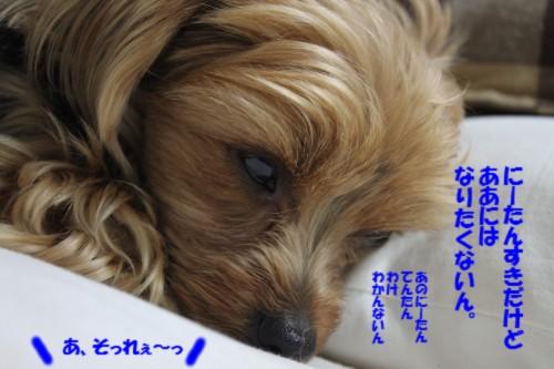 IMG_6489_20130404203256.jpg