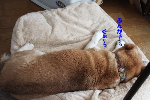 IMG_6871_20130419125917.jpg