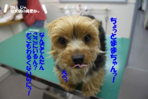 IMG_6948_20130425121514.jpg