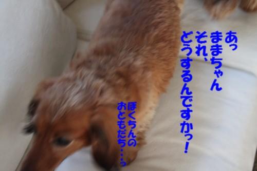 IMG_7856_20130526144613.jpg