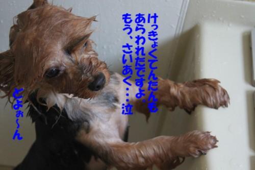 IMG_7893_20130526191841.jpg