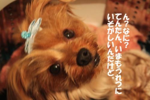 IMG_8247_20130614093343.jpg