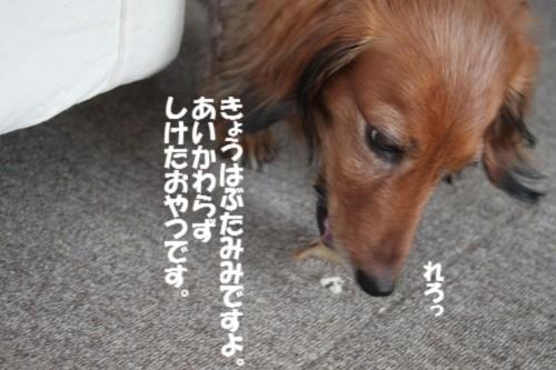 IMG_8395.jpg