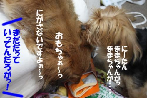 IMG_8561_20130625145900.jpg
