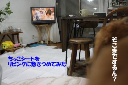 IMG_8715.jpg