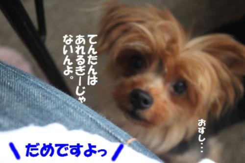 IMG_8782.jpg