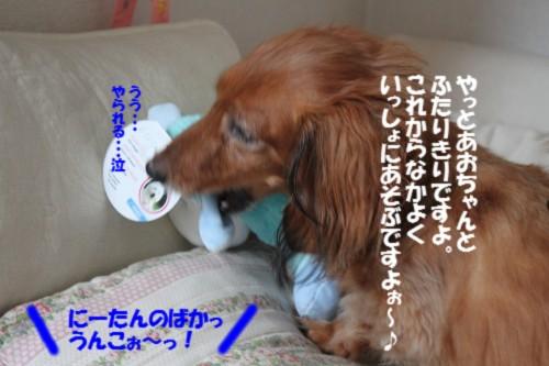 IMG_9313_20130725133129.jpg
