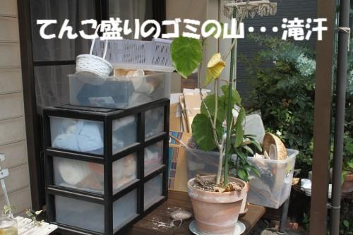 IMG_9389.jpg