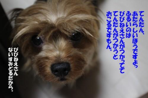 IMG_9578_2013080111400876b.jpg