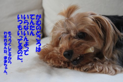 IMG_9636_20130803130637667.jpg