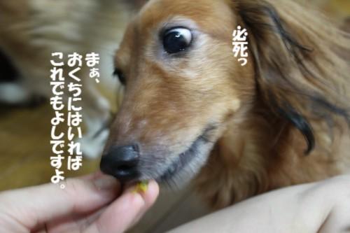 IMG_9662.jpg