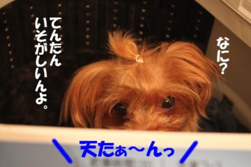 IMG_9773.jpg