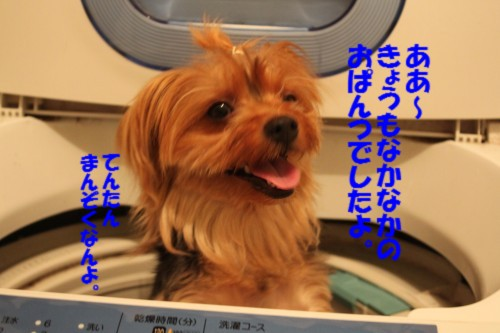 IMG_9775.jpg