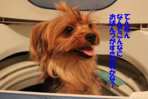 IMG_9780.jpg