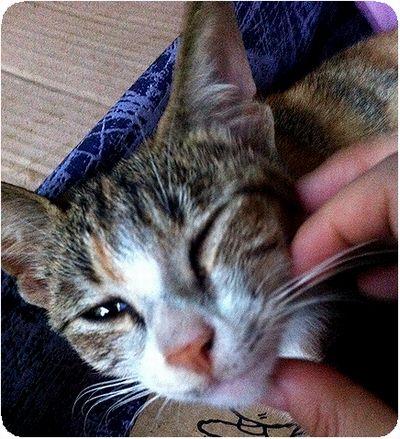 野柳触る猫