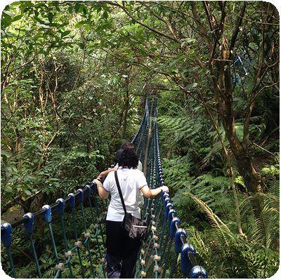 油桐花吊り橋