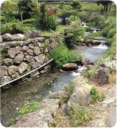 竹子湖風景
