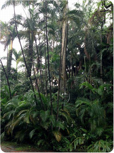 台北植物園シダ