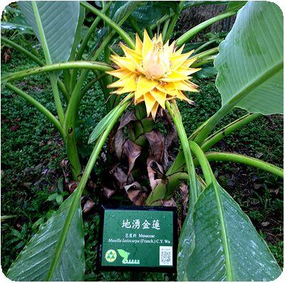 台北植物園黄色花