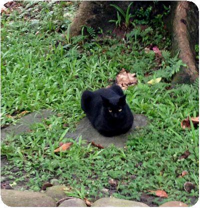 台北植物園黒猫