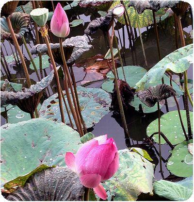 台北植物園実