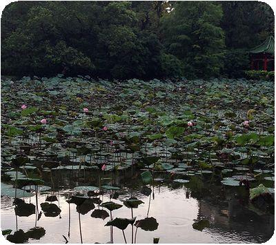 台北植物園池