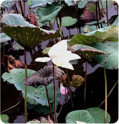 台北植物園白