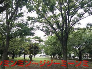 20130725_132422.jpg
