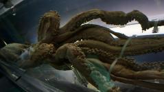 国立科学博物館「深海」
