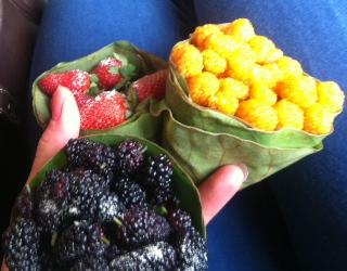 fruits1.jpg