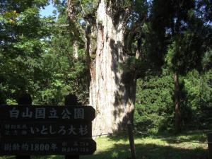 130817大杉'