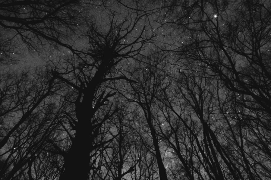 下弦の夜 014s