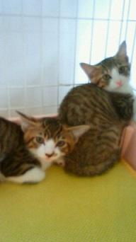 子猫2NEC_0828