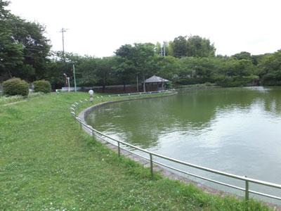 kamega2.jpg