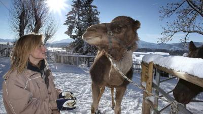 kamel2-400.jpg
