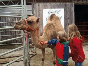 kamel3.jpg