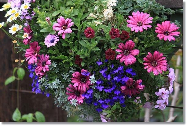 HG周辺花壇 1