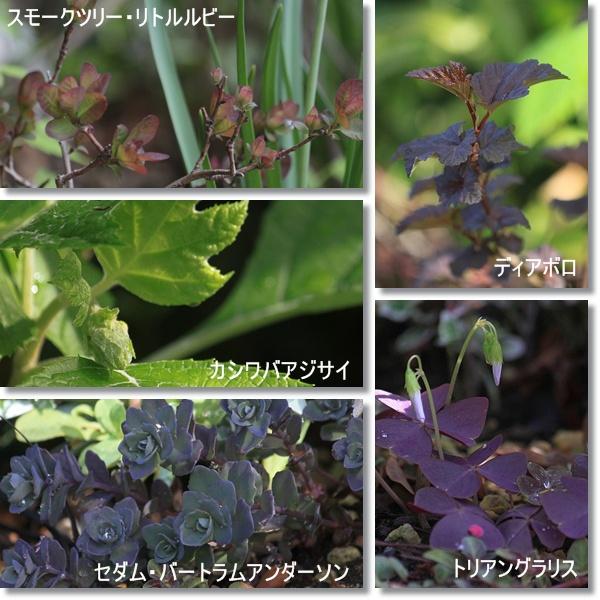 花木花壇 4.25